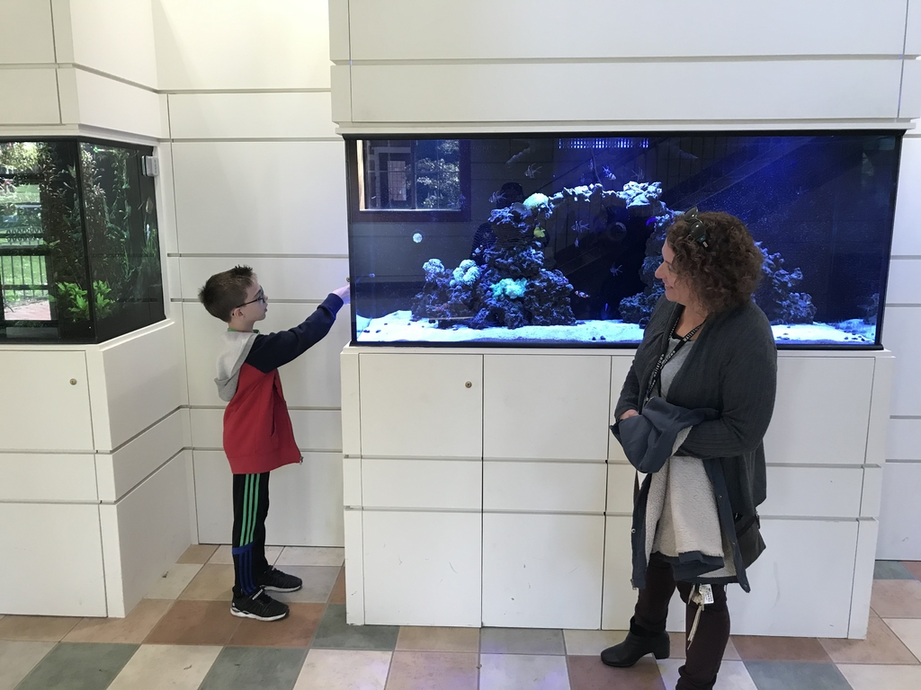 Student checking out fish tank at Taft